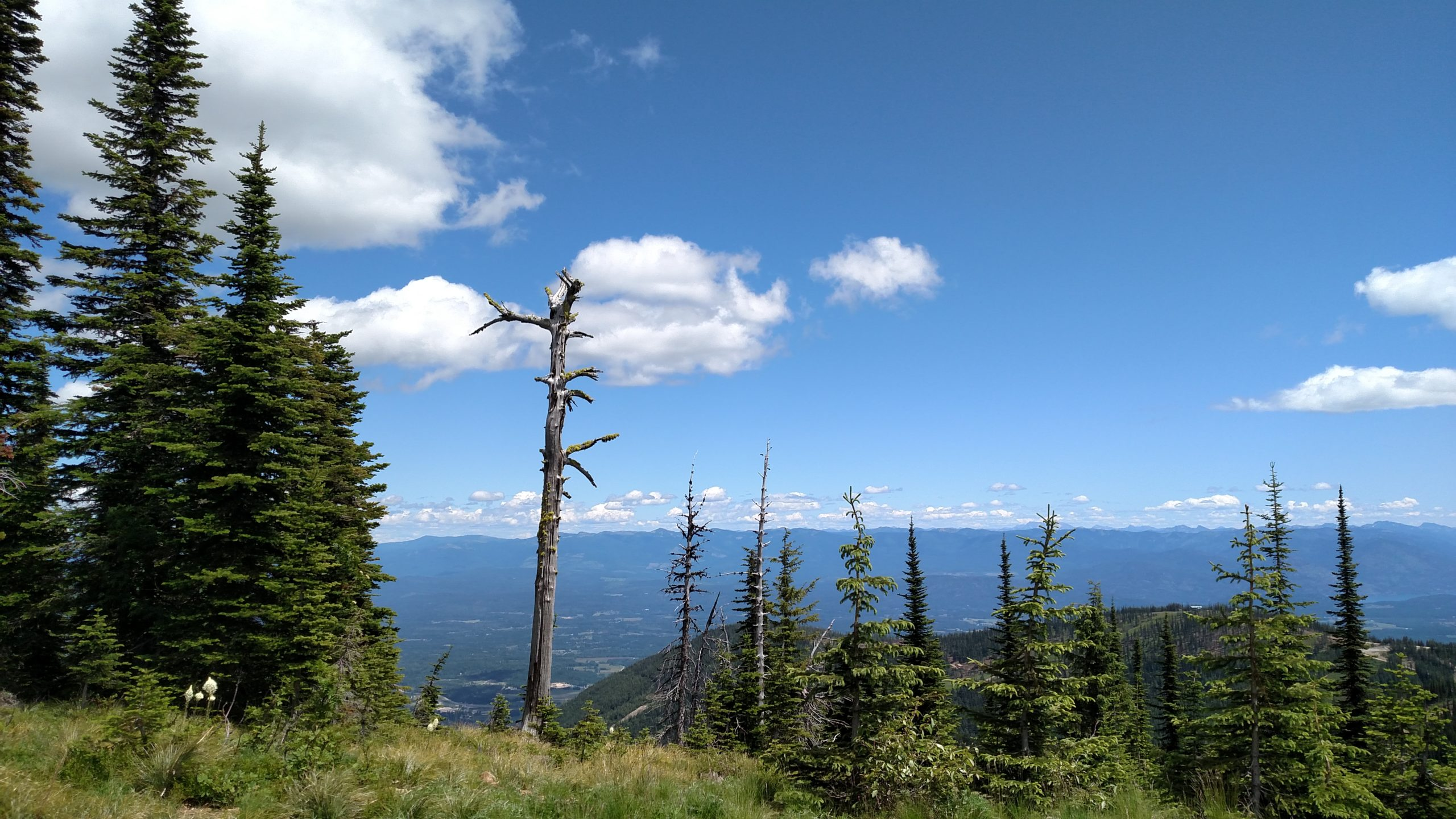 view from a mountain ridge featuring dead tree standing alone