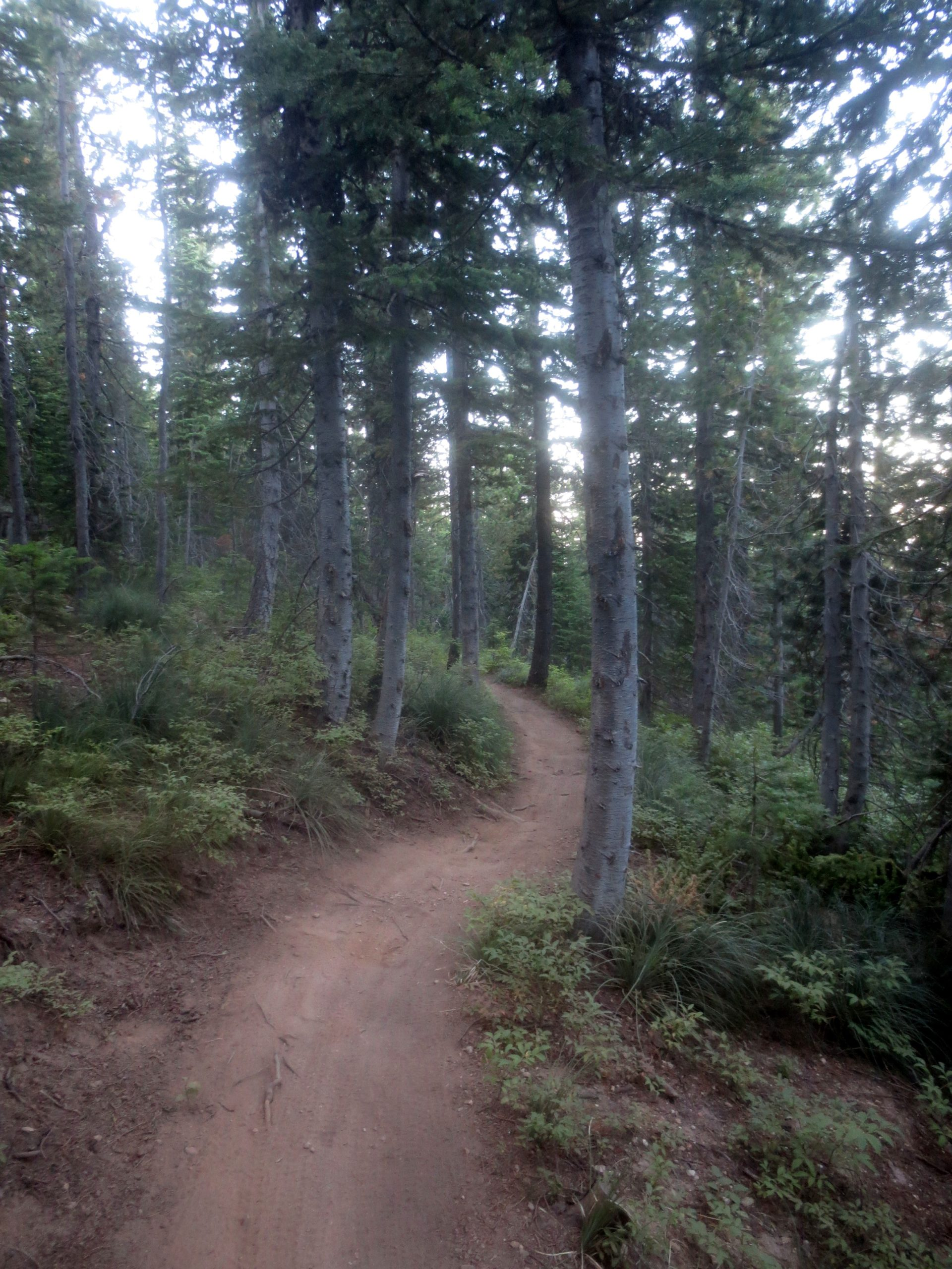 packed dirt trail winding through a forest