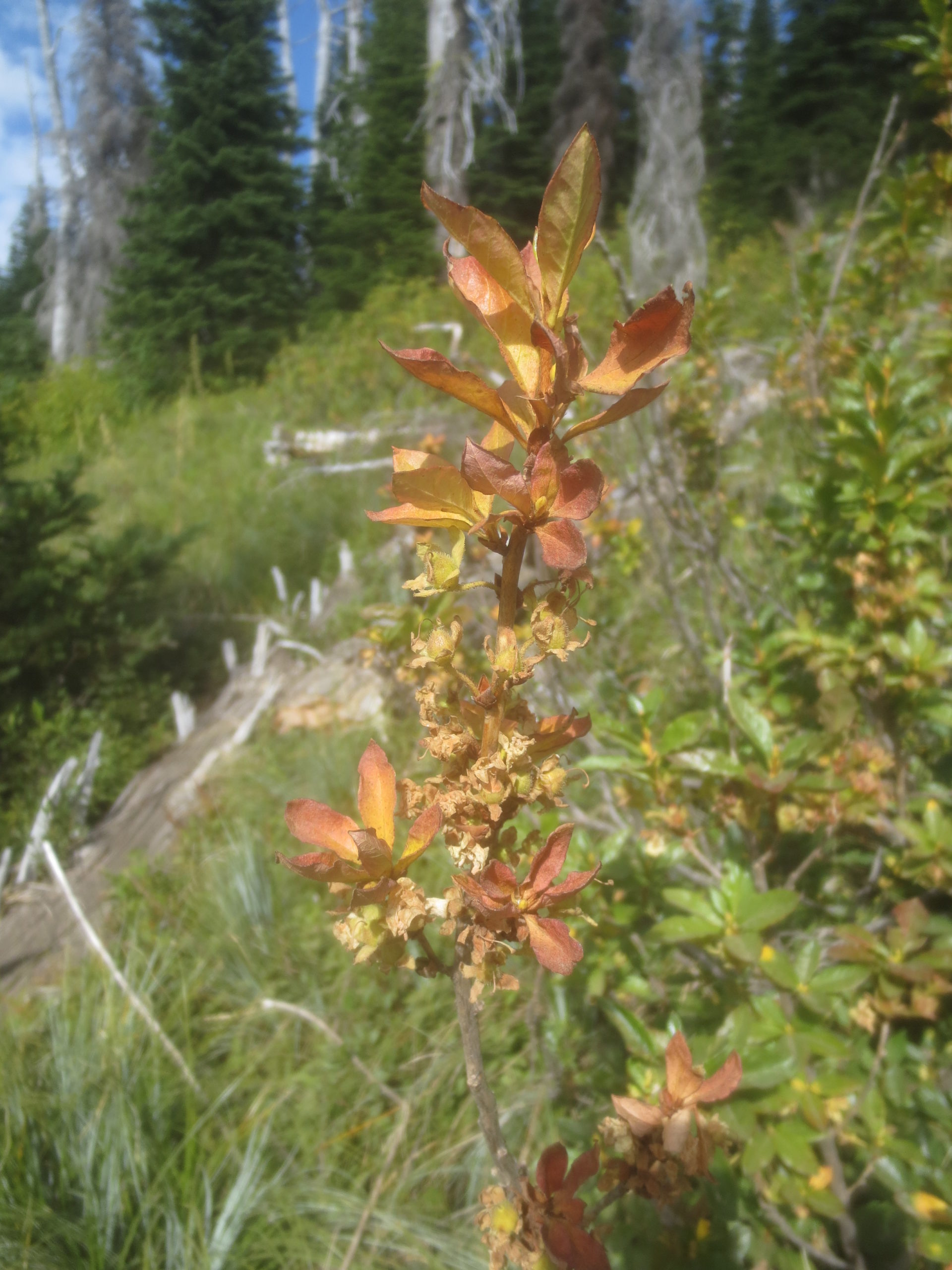 closeup of wildflower foilage turning autumnal colors