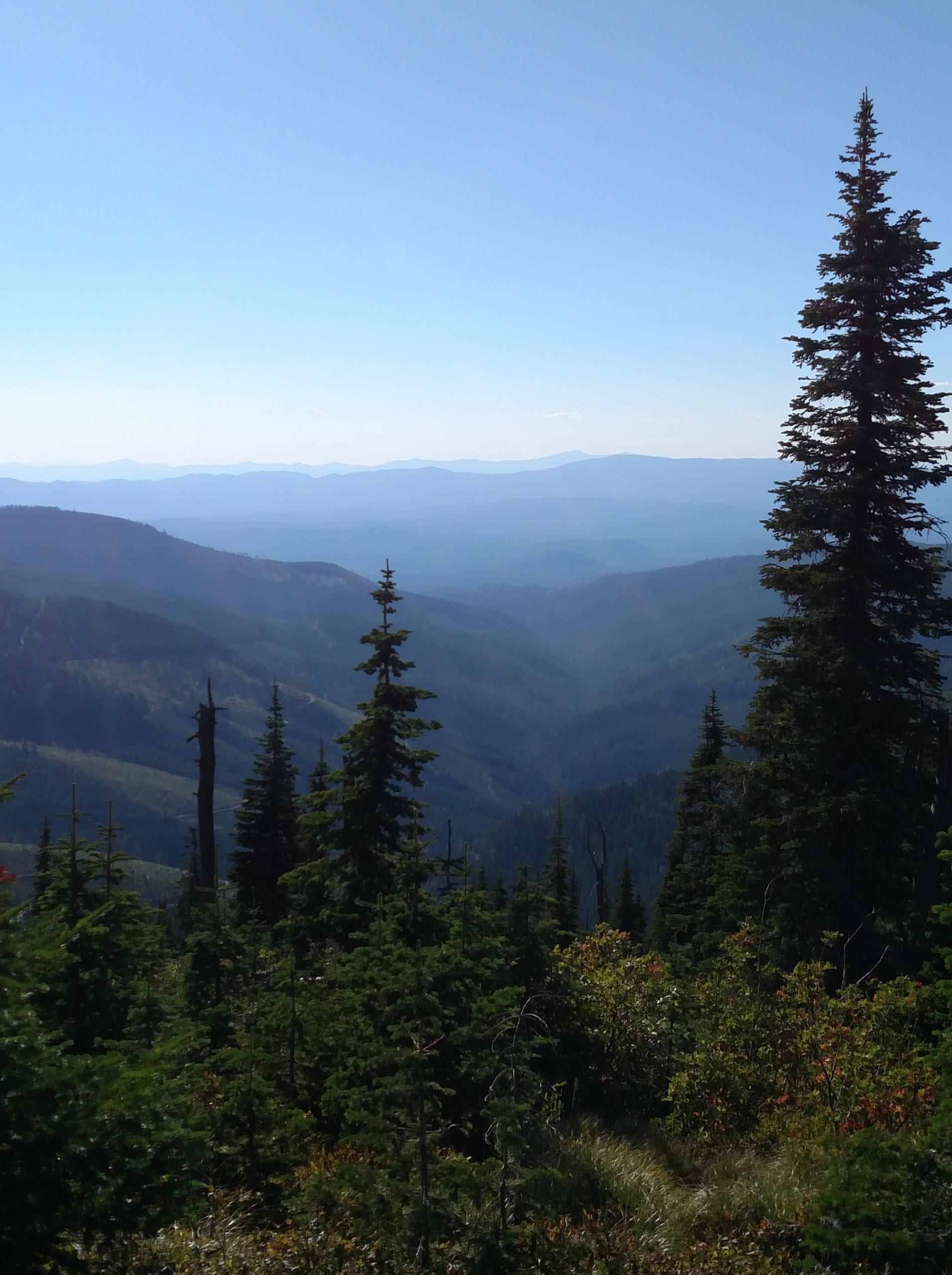 view from a mountain into a forested valley