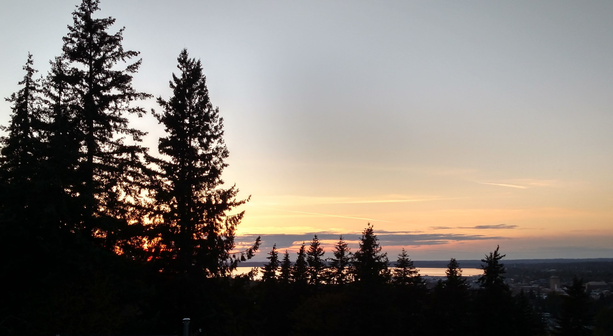 sunset with pine trees in the foreground and a body of water in the background