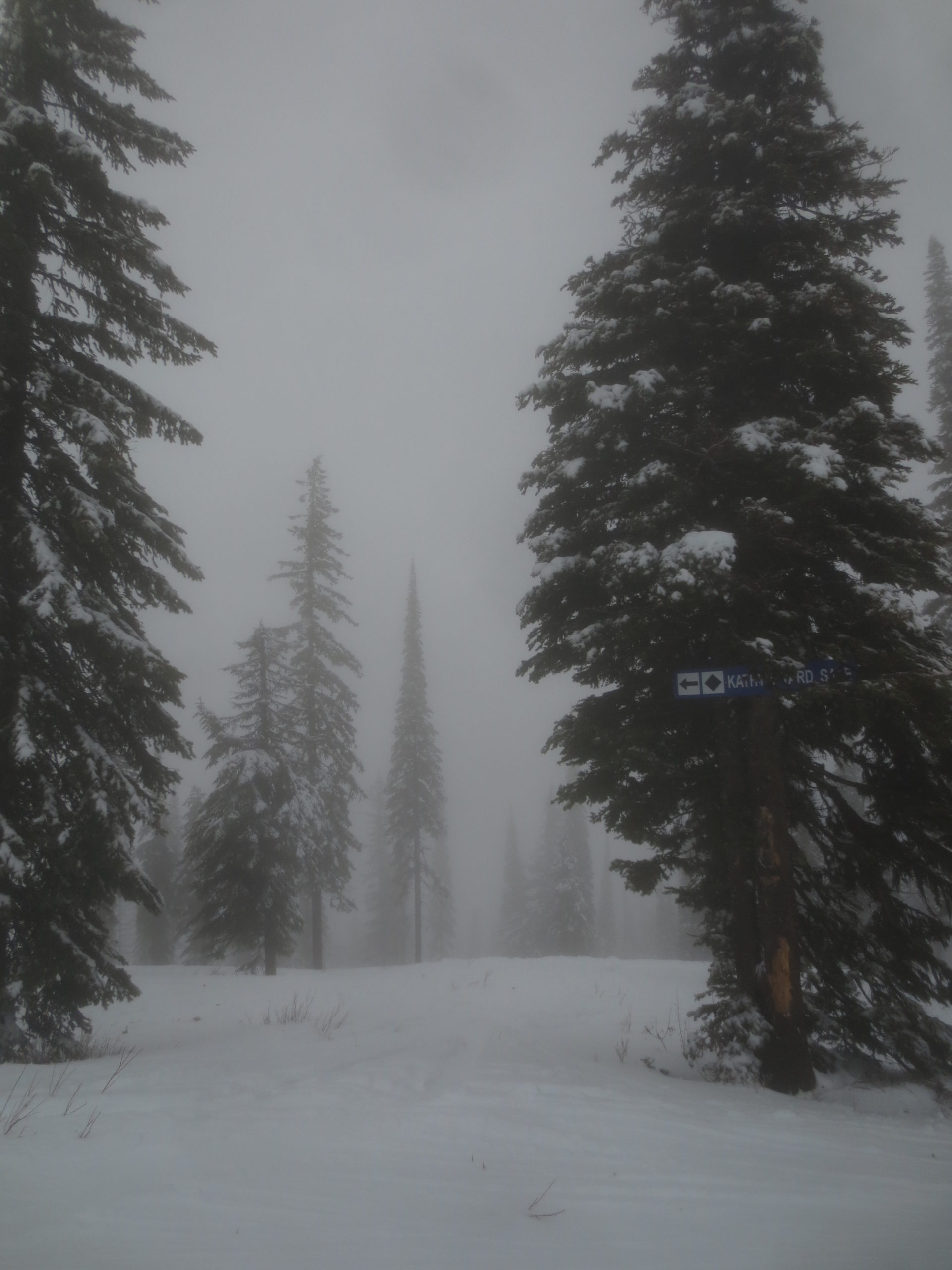 view of the top of a ski run with trees on a foggy day