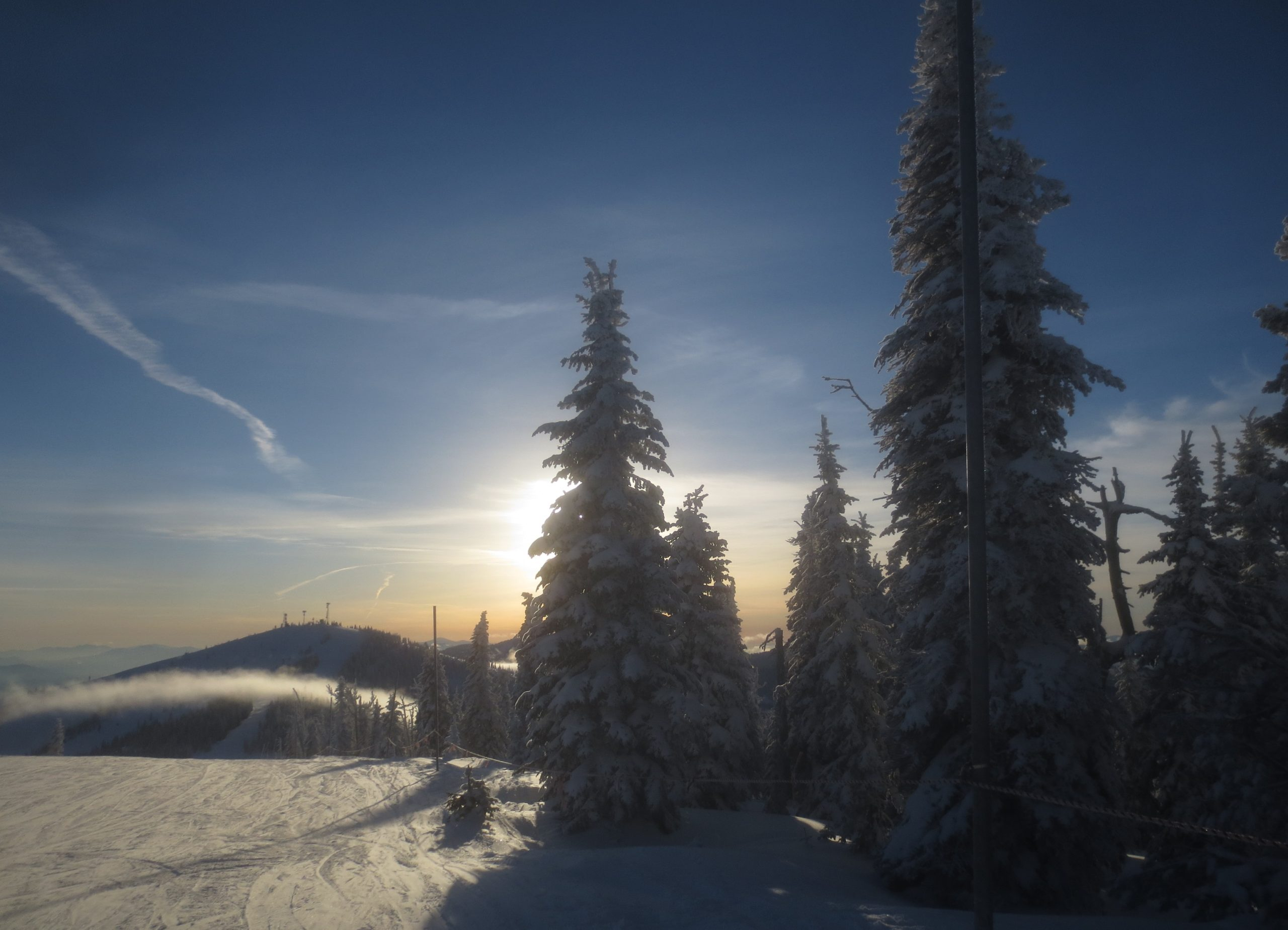 snow covered pine trees backlit by late in the day sun